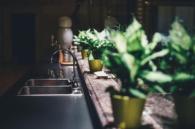 blur plants